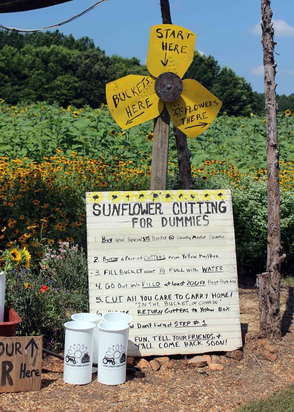 Sunflower Farm Festival