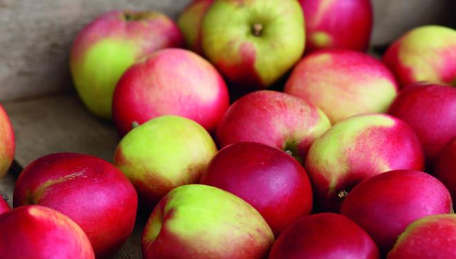 A Taste of Apple Season