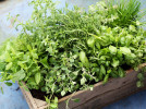 Southerners Guide to Planting Herbs