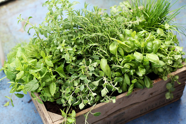 southerners guide to planting herbs  deep south magazine, Beautiful flower