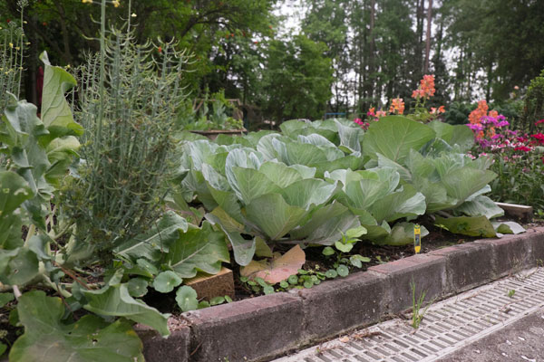 An Herb Parterre And Vegetable Garden Are Located Behind The Reihnard  Farmhouse.
