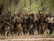 "The ""Real"" Free State of Jones"