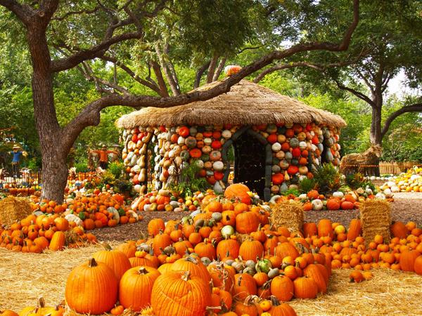Dallas arboretum displays record number of pumpkins deep - Botanic gardens pumpkin festival ...